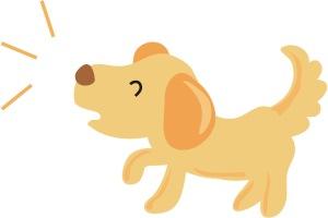 barking doc